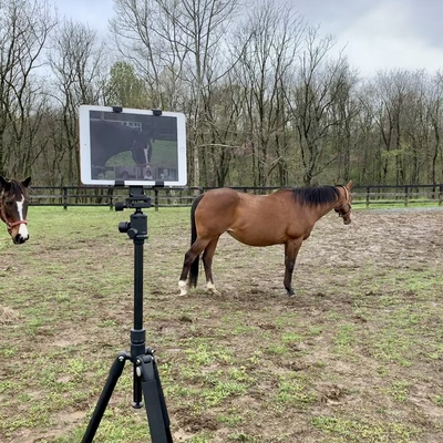 Virtual Equine-Assisted Sessions